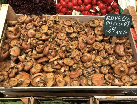 CATALAN AUTUMN TRADITIONS: MUSHROOMS, CHESTNUTS AND SWEET WINE